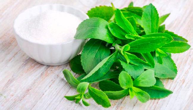 Estevia , Usos y propiedades de esta planta medicinal